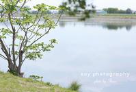みんなで眺めた景色を - from自由が丘 ベビー・キッズ・マタニティ・家族の出張撮影、say photography