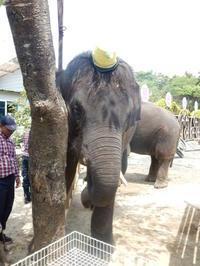 ♡結希、5歳のお誕生日、おめでとう♡2019年6月12日 - ゾウさん