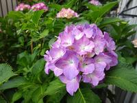 6月の庭 - マイニチ★コバッケン