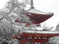 喜多院多宝塔 - 風の香に誘われて 風景のふぉと缶