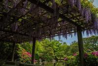 城南宮~春の花々 - 鏡花水月