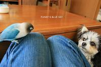 B.B & Chipo*ある日のフタリ^^ - FUNKY'S BLUE SKY