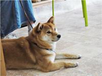 今週の「犬のしつけ方教室」 - SUPER DOGS blog