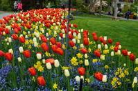 カナダ、バンクーバー旅日記☆5月3日ビクトリアへ~ブッチャードガーデン19 - Let's Enjoy Everyday!