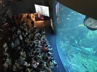 湘南モノレールで行く江ノ島、新江ノ島水族館新江ノ島水族館その1窓編 - ブリキの箱