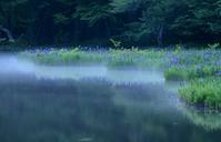 カキツバタの咲く池と日本庭園琵琶湖周辺にて - 峰さんの山あるき