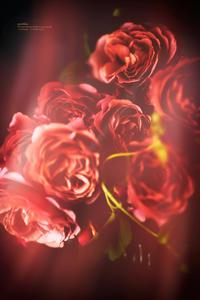 La Vie en rose - purebliss