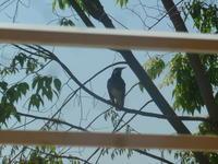 鳥。 - 平野部屋