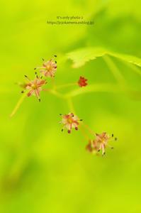 花とプロペラ - It's only photo 2