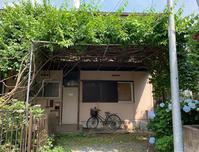 6月の庭  2019 - ちーの助が行く