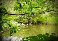 アオサギ(青鷺)の寿命 - 世話要らずの庭