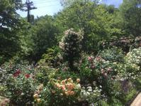 神戸布引ハーブガーデンへ2 - 花の自由旋律