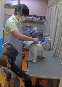動物病院と青山文平6月1日(土) - しんちゃんの七輪陶芸、12年の日常