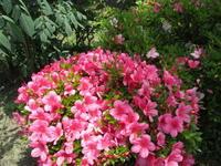 庭の花 - 季節の写真
