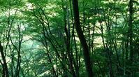 森林浴 - そばやの娘の話