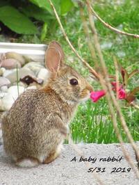 可愛い赤ちゃんウサギと空 - NYからこんにちは