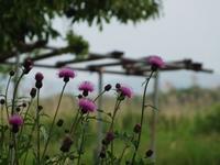 紫系の色は好きな色 - じょんのび