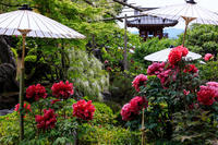 牡丹咲き乱れる當麻寺奥院 - 花景色-K.W.C. PhotoBlog