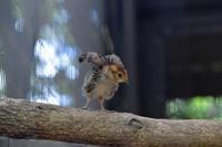 鳥たち - 動物園へ行こう