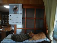 猫時間 - すみやのひとり言・・・