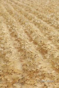 麦秋 - 季節のおくりもの