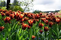 カナダ、バンクーバー旅日記☆5月3日ビクトリアへ~ブッチャードガーデン20 - Let's Enjoy Everyday!