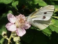 #チョウ『蝶 と 花』 - 自然感察 *nature feeling*