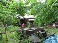 たねまきハウスの叶商店さん - 南阿蘇 手づくり農園 菜の風