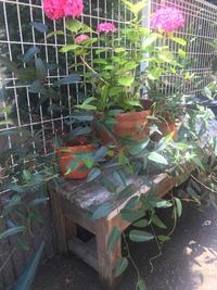 お庭めぐりからスタート - 雛のスローライフ