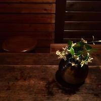 侘助の花 - 暮らしのエッセンス   北鎌倉の山の家から