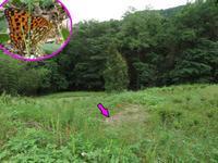 ウラギンヒョウモンのメス - 秩父の蝶