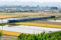 EF60 19 ELぐんまよこかわ号 - Salamの鉄道趣味ブログ