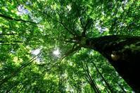 みちのくブナ林 - みちのくの大自然