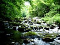 新緑の樹海に迷子・・「鮫川支流にて」 - Nature World & Flyfishing