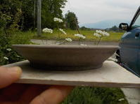 皿を4枚(No.47) - 薪窯冬青犬器
