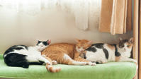 最初の3匹 - 猫と夕焼け