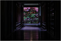 赤い楓 - HIGEMASA's Moody Photo