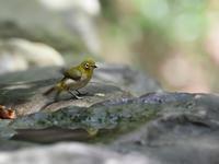 2019 06 01   6月度初撮影は、同行させて頂き初訪問の探鳥 - soyokaze3の日記