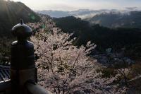 光射す~桜の長谷寺 - katsuのヘタッピ風景