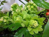 早春の花が病院に来ました - 新潟県柏崎市の精神科病院 【 関病院 】 です