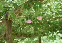 続・湧永庭園のバラ - できる限り心をこめて・・Ⅲ