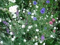 混植 - natural garden~ shueの庭いじりと日々の覚書き