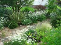 混植と100円クレマチス - natural garden~ shueの庭いじりと日々の覚書き