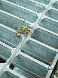 ☀・気温15℃の朝・・・カエル君朽木小川・気象台より - 朽木小川・気象台より、高島市・針畑・くつきの季節便りを!