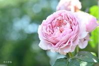 2019 バラの新品種 - 今日の小さなシアワセ