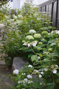 二番花の方が美しい?@チャイコフスキーとキャスリン・モーレー - Doriのお気に入り