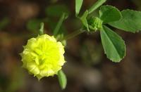黄色い花 - ネコと裏山日記