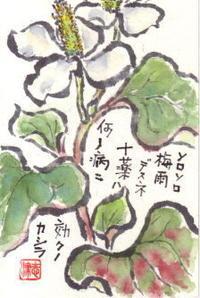 梅雨入り前の庭の手入れ - 気まぐれ絵手紙