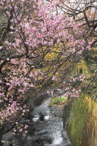 「桜」の反省会 - Taro's Photo