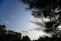 夕方の散歩(4cut)宮古島 -     ~風に乗って~    Present